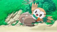 Rowlet de Ash usando placaje.