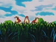 EP001 Tres Pidgey en un árbol.png