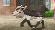 P13 Mightyena.png