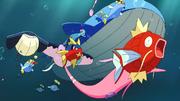 P07 Pokémon marinos.png