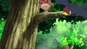 EP804 Hoothoot Taillow.jpg
