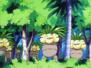 Bosque de Exeggutor