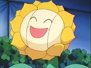 EP137 Sunflora (2).png