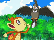 EP544 Chimchar y Staravia.png