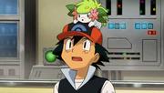 P11 Ash con Shaymin encima de su gorra.png