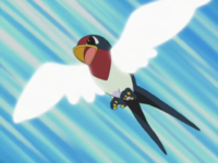 Taillow usando ataque ala.