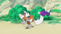 Poipole de Ash usando ataque furia.