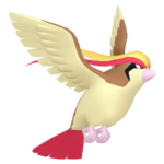 Pidgeot macho