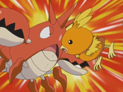 EP310 Torchic y Corphish atacándose.png