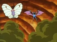 Butterfree de Ash y Zubat de Brock usando remolino.