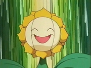 EP137 Sunflora (7).png