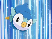 EP569 Piplup.png