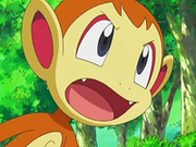 EP550 Chimchar exige a Polo que combata.png