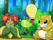 EP497 Bellossom, Bellsprout y Sandshrew.png