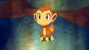 P10 Chimchar de Alice.png