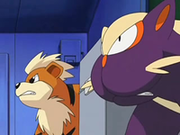 EP565 Growlithe y Stunky.png