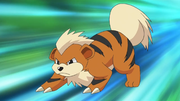 EP604 Growlithe.png