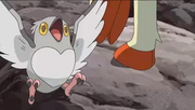 EP800 Pidove.png