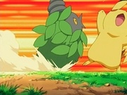 EP499 Burmy de Cheryl VS Pikachu de Ash.jpg