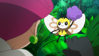 Ribombee salvaje usando bola de polen (dañina).