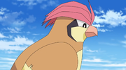 EP1095 Pidgeotto.png