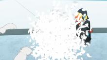 Toucannon salvaje usando danza pluma.