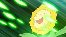 Sunflora usando hoja afilada