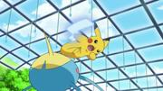 EP810 Surskit VS Pikachu.png