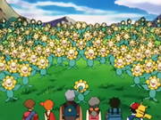 EP189 Sunflora (3).png