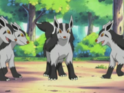 EP287 Mightyena.png