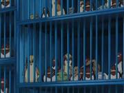 EP482 Jaulas con Pokémon.png