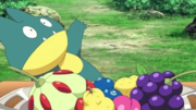 P19 Munchlax.png