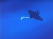 EP216 Mantine (3).png
