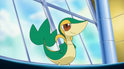 EP661 Snivy.png