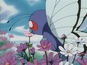 Butterfree recolectando polen.
