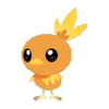 Torchic CJP.png