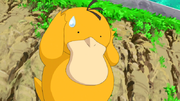 EP989 Ditto-Psyduck.png