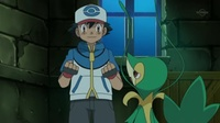 Snivy de Ash usando látigo cepa.