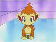EP470 Chimchar en el laboratorio.png