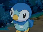 EP567 Piplup.png