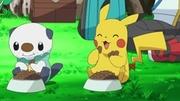 EP728 Oshawott y Pikachu comiendo.jpg