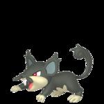 Rattata de Alola macho