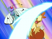 EP464 Combusken de May-Aura vs Butterfree de Drew.png
