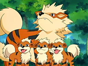 EP416 Growlithe y Arcanine.png