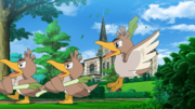 EP1107 Farfetch'd.png
