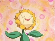 EP137 Sunflora (8).png