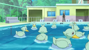 EP773 Piscina.png