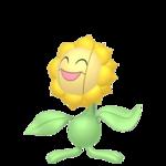 Sunflora macho