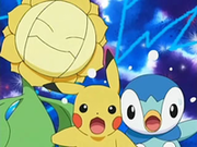 EP505 Sunflora, Pikachu y Piplup.png