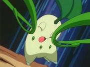 ...luego se lo devuelve a la Chikorita de Ash con el doble de daño.